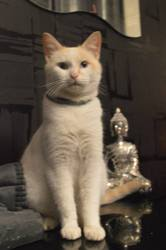 Minoche, chat