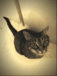 Minou, chat Gouttière