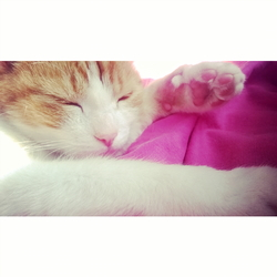 Minou, chat