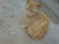Minouch, chat