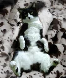 Minouch, chat Gouttière