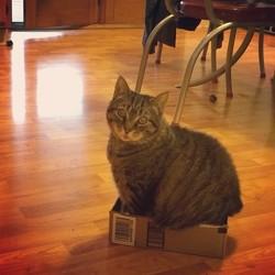 Minouche, chat