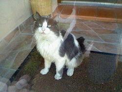 Minouchka, chat Gouttière