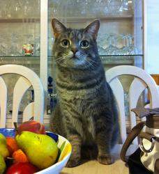 Minoune, chat Gouttière