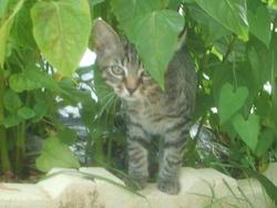 Minoux, chat