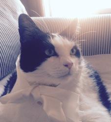 Minus, chat Gouttière