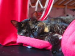 Miou, chat Gouttière