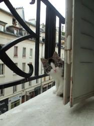Miou Miou, chat