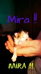 Mira, chat Gouttière