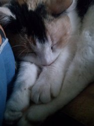 Mirabelle, chat