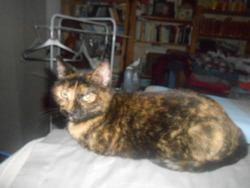 Mirabelle, chat Gouttière
