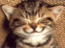 Mireille, chat