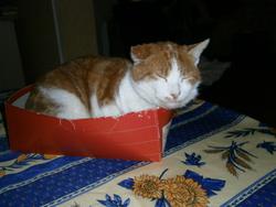 Miro, chat Gouttière