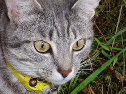 Mischa, chat Gouttière