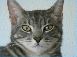 Misgetta, chat Gouttière
