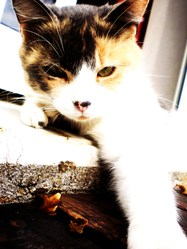 Miskette, chat