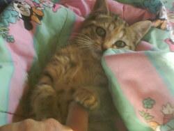Miss , chat Gouttière