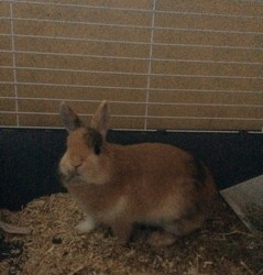 Miss' Bunny, rongeur Lapin