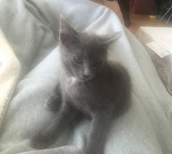 Miss Grey, chat Gouttière