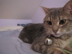 Miss Kikine, chat Gouttière