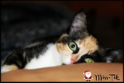 Miss-Tik, chat Gouttière