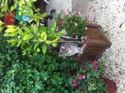Miss Tinguette, chat Gouttière