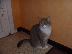 Missa, chat Gouttière