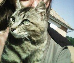 Missmouche, chat Gouttière