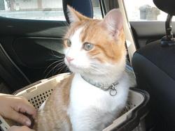 Misso, chat Gouttière