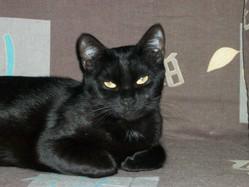 Missy, chat Gouttière
