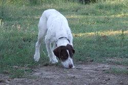 Missy, chien