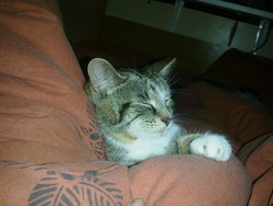 Mistie, chat