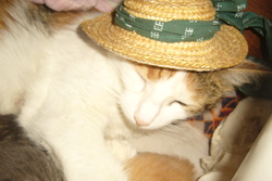 Mistigrète, chat Gouttière