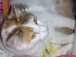 Mistigrette, chat Gouttière