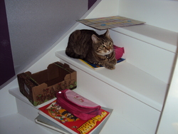 Mistigri, chat Gouttière