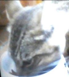 Mistigrix, chat