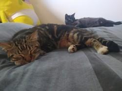 Mistoub, chat Gouttière