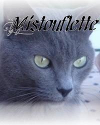 Mistouflette, chat Bleu russe
