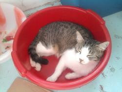 Mistouille, chat