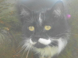 Misty, chat Gouttière