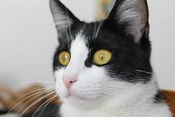 Mitaine, chat Gouttière
