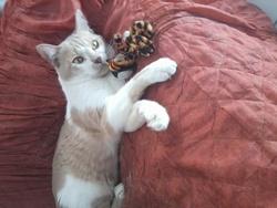 Mitshuko, chat Gouttière