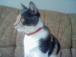Mitsi, chat Gouttière