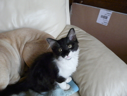 Mitsy, chat Gouttière