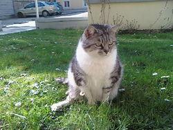 Mitye, chat