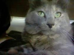 Mitzi, chat