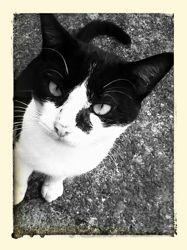 Miya, chat Gouttière
