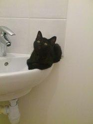 Miyazaki, chat Gouttière