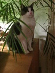 Mizdy, chat Gouttière