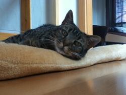 Mizette Dcd, chat Gouttière